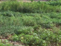 1002081929_1_644x461_fenced-and-dry-plot-of-land-at-ajao-estate-isolocofo-25m-and-30m-lagos-mainland